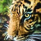 Eye Of The Tiger (GO2) by Ray Warren
