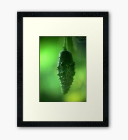 A Cucumber in the Works Framed Print