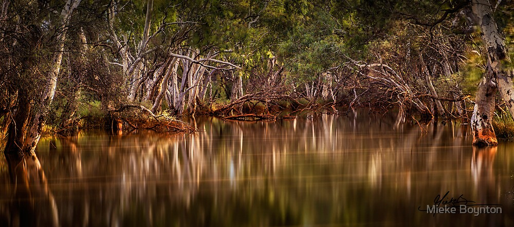Riverside Reflections by Mieke Boynton