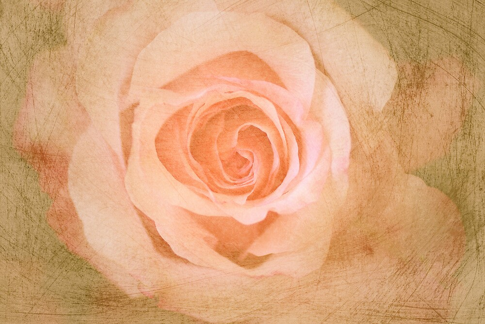 Artistic scratched textured Romantic Rose  by walstraasart