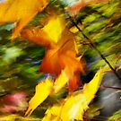 Fall burning 05 - 2012 by Joseph Rotindo