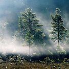 5.9.2013: September Morning II by Petri Volanen