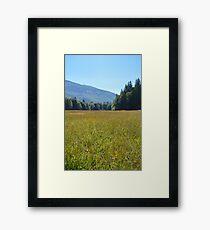 Nature Walk Framed Print