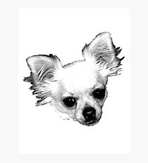 Chihuahua Dog Picture Engraving Photographic Print