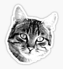 Tabby Cat Digital Engraving. Images of Cats Sticker