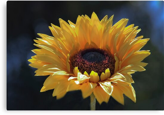 Chevflower! by Heather Friedman