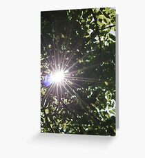 Sun flare through trees Greeting Card