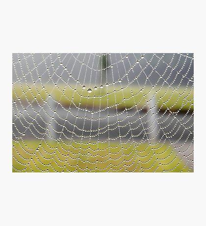Dew On Spiderweb Photographic Print