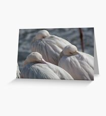 Catching 40 winks Greeting Card