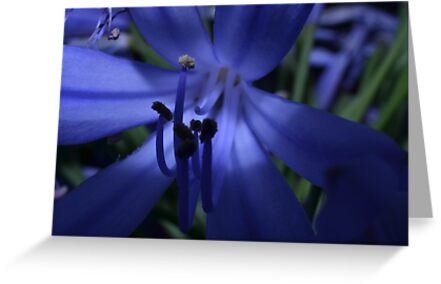 Blue by yeuxdechat