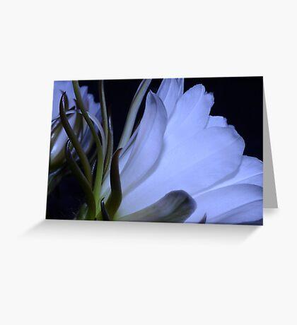 Night Beauty Greeting Card