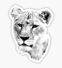 Lioness. Female Lion. Digital Wildlife Engraving Image Sticker