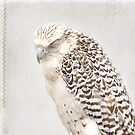 Tundra Falcon by Rebecca Cozart