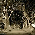 The Dark Hedges of Stranocum, Ballymoney, County Antrim by Laura Butler