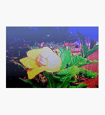 Our tropical nights Photographic Print