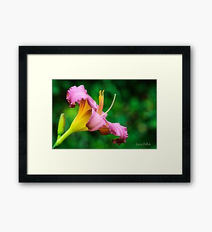 Lovely Little Grapette Framed Print