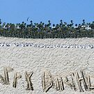 Happy Birthday from the Beach by Rebecca Dru