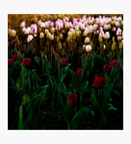 Bloomin' lovely Photographic Print