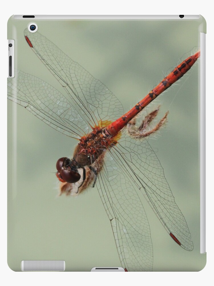 Dragonfly for the iPad by RickLionheart
