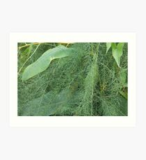 green fern and leaves from swampland Art Print