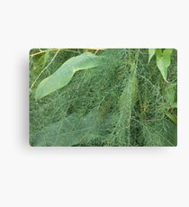 green fern and leaves from swampland Canvas Print