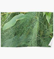 green fern and leaves from swampland Poster