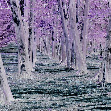 Trees by DaveKing71