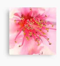 Peach Blossom Macro Canvas Print