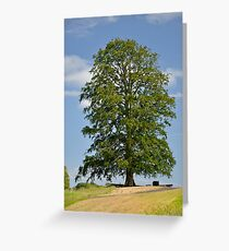 A Lonely Tree Greeting Card
