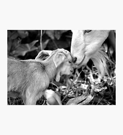 Kidding Around 3 - A Mother's Love Photographic Print