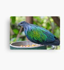 Multi Colored Poofy Bird Canvas Print