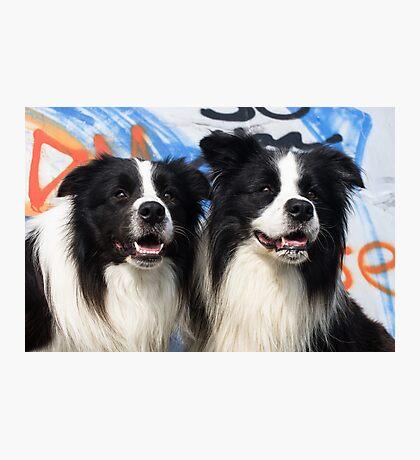 2 Doggies  Photographic Print