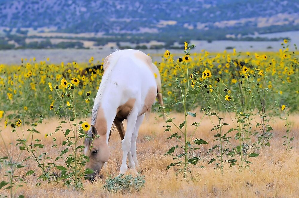 Pinto In The Wildflowers by Kelly Jay