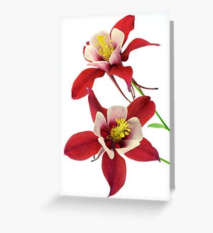 Columbines Greeting Card