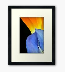 Complimentary Colors of Nature Framed Print