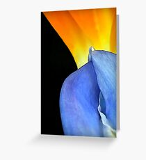 Complimentary Colors of Nature Greeting Card