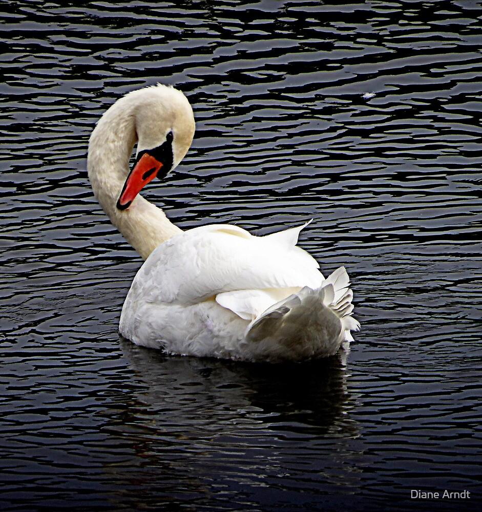 Male Juvenile Mute Swan (please read description) by Diane Arndt