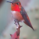 HummingbirdXXXX by loiteke