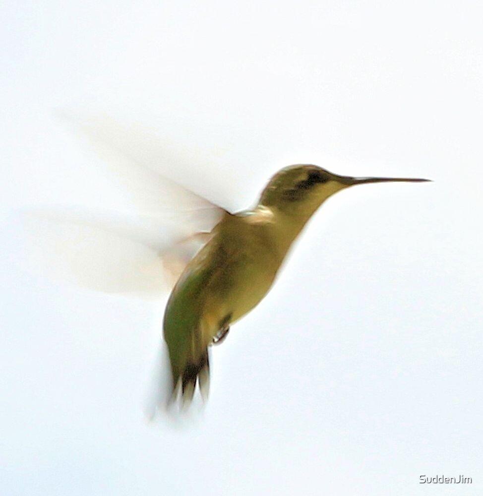 Hummingbird by SuddenJim