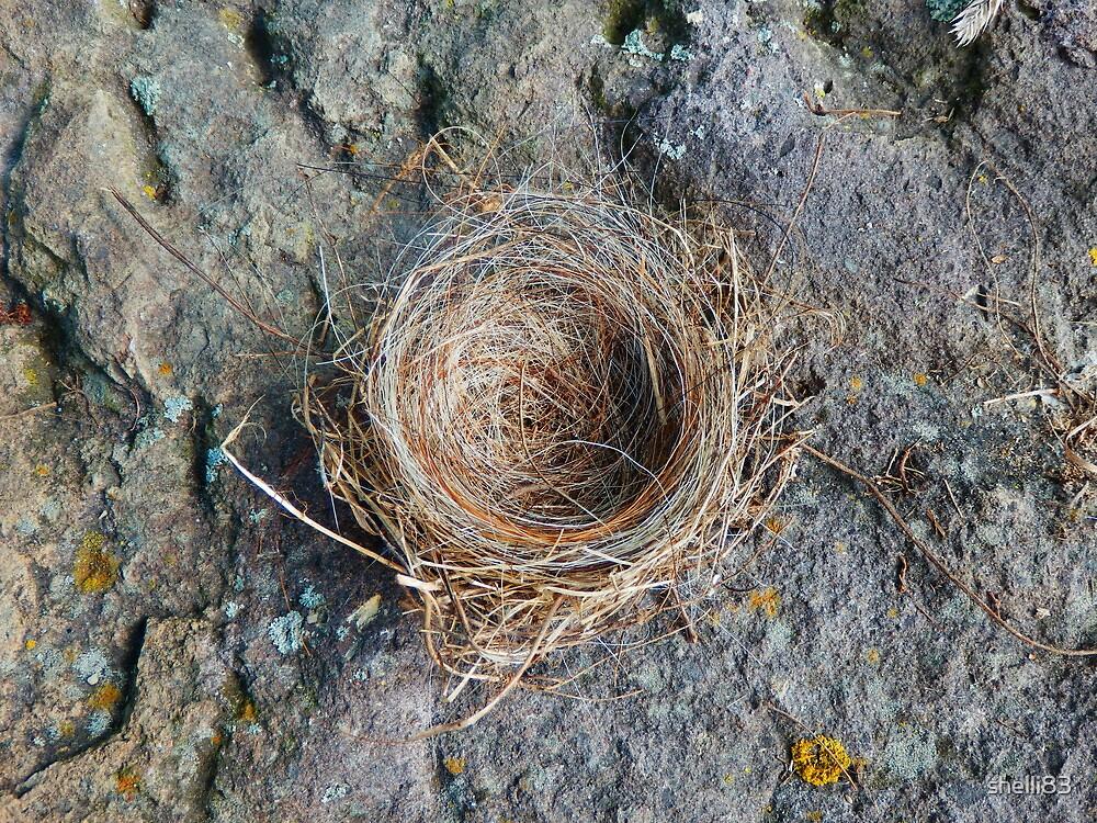 bird's nest by shelli83