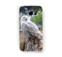 Snow owl  Samsung