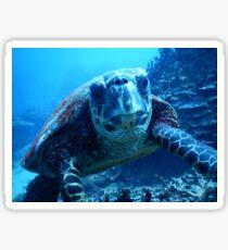 Samoan Green Turtle Sticker