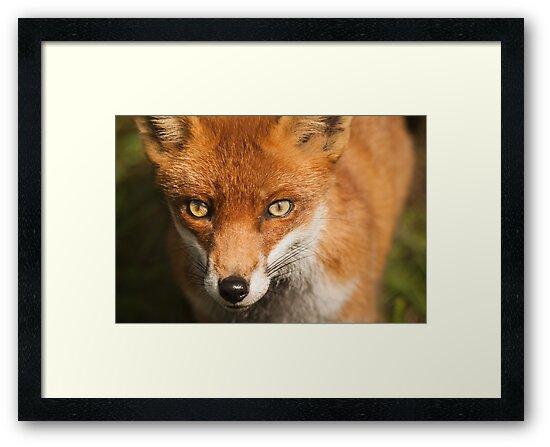 Penetrating Stare by LouiseGroom