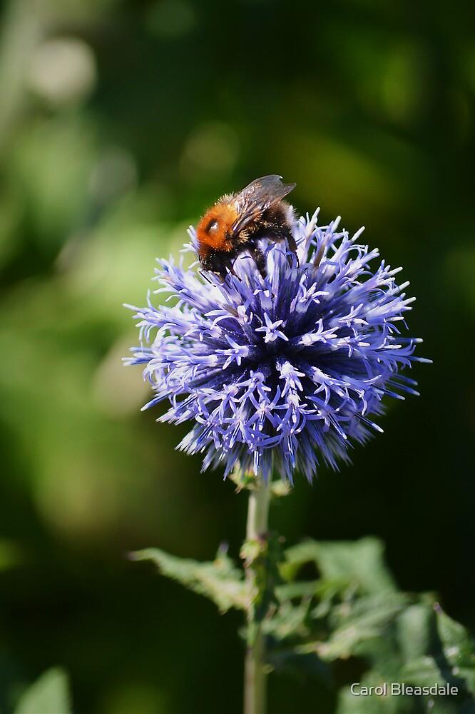 Pollination by Carol Bleasdale