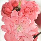 Spring Blossoms 6 by Alison Hill