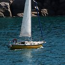 Sailing Back into Marina, Magnetic Island. Far Nth. Que. by Rita Blom