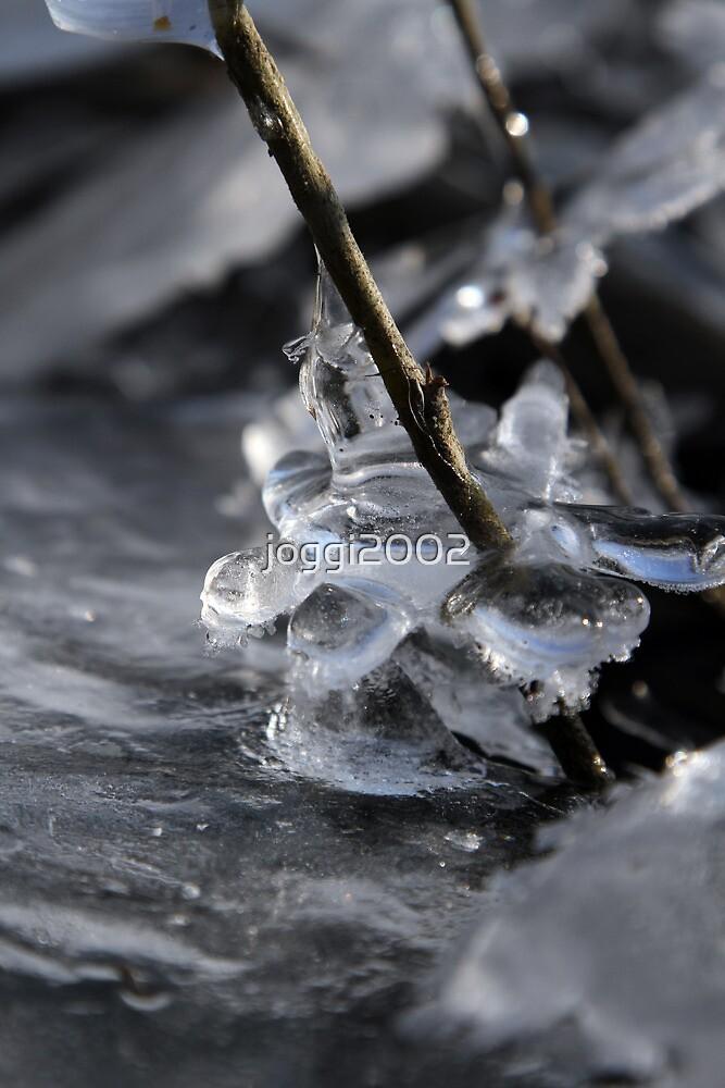 Ice Flower by joggi2002