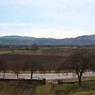 Wine Country in Spring by TERRIBLETRISTAN