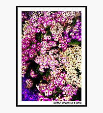 Flowers, Fitzroy Gardens Photographic Print