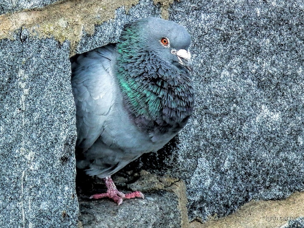 Pigeon Holed by lynn carter